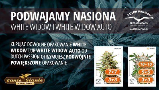 TanieSianie.pl - Nasiona Konopi, Marihuany, GRATISY! Sklepy: KATOWICE WROCŁAW, WARSZAWA, GDAŃSK